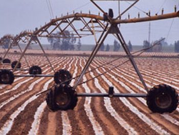 Irrigation of a strawberry field   Spain